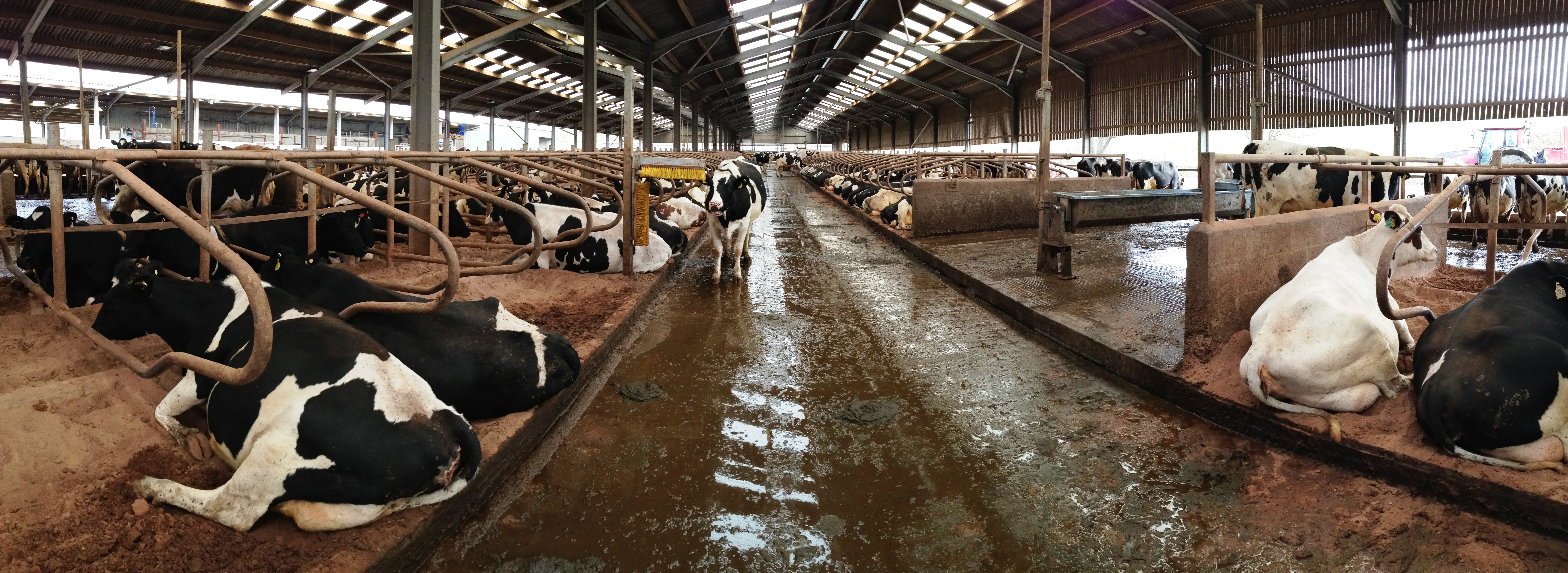 Case study: Designing a new dairy unit