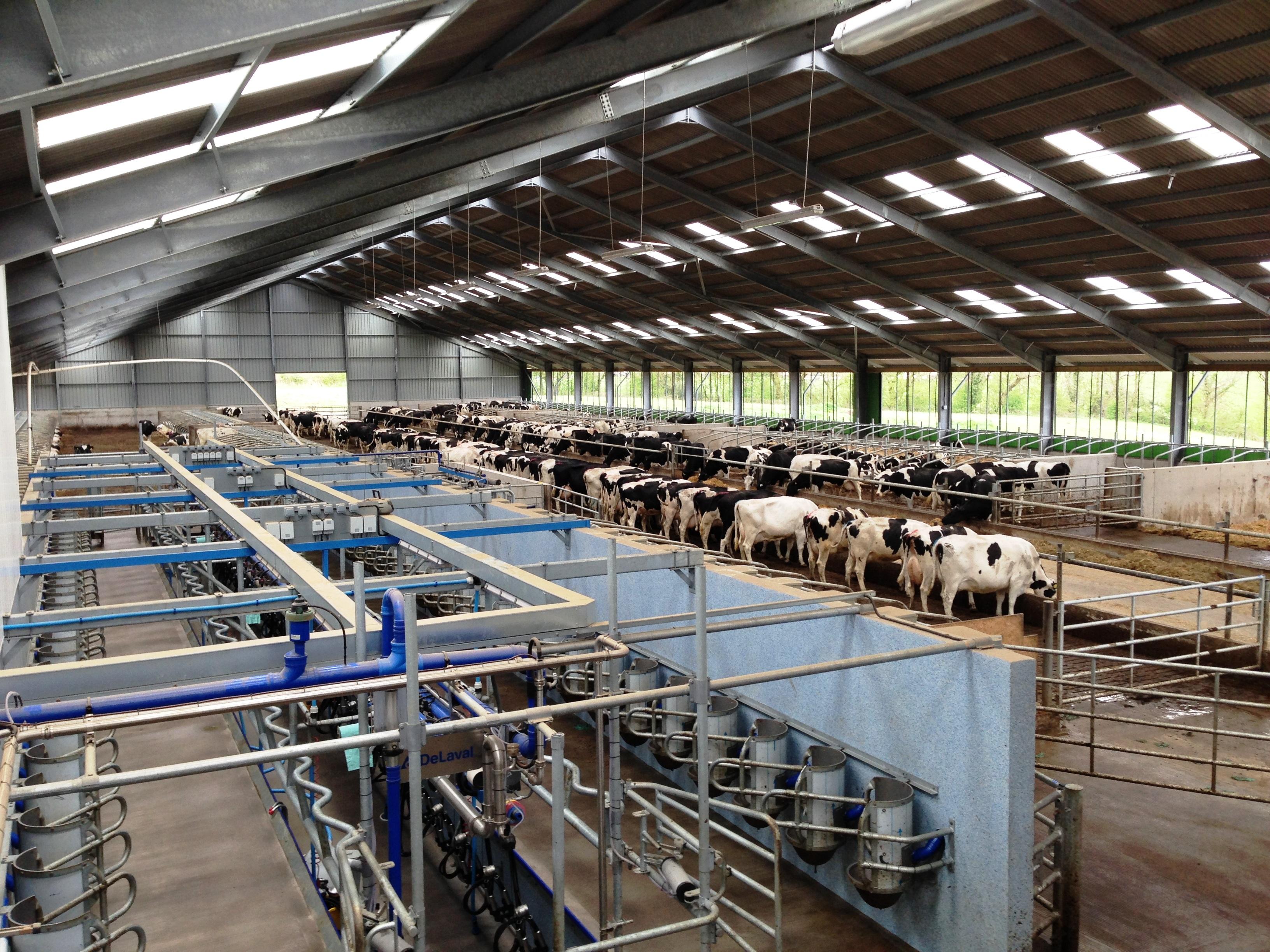 Carmarthenshire Dairy Unit At Penygraig