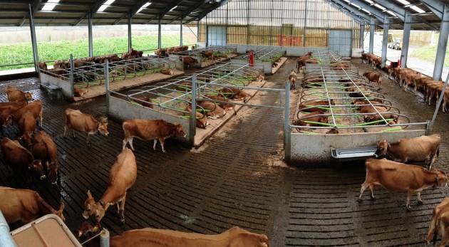 November 2013 milking video - 1 1