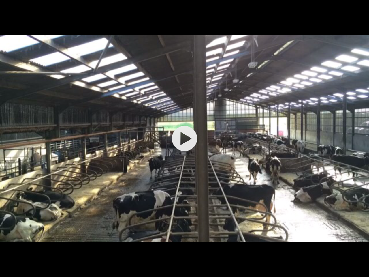 Monitor Your Herds Behaviour Through Video Technology.